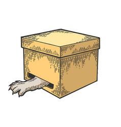 cat in box paw in hole color sketch engraving vector image