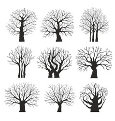 Collection of trees silhouettes vector image