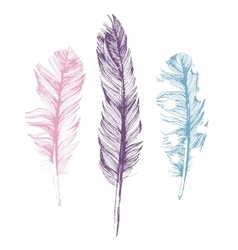 Hand drawn feathers on white background vector