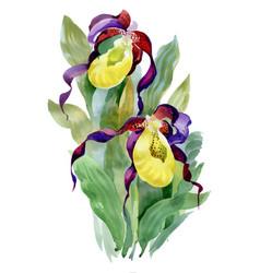hand drawn iris flowers on white background vector image