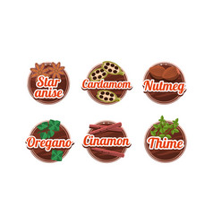 herbs and spices kitchen badges set star anice vector image