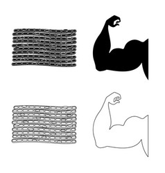 Isolated object fiber and muscular icon set of vector