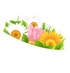 Flower gerber and leaves vector