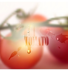 fresh blurred food background with tomatoes water vector image