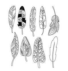 set of stylized bird feathers collection vector image