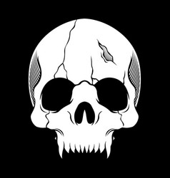 skull retrovintagedetail hand drawing vector image