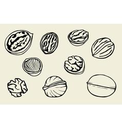 Walnut set hand drawn vector image