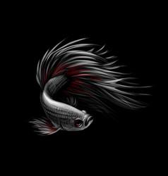 colourful betta fishsiamese fighting fish vector image