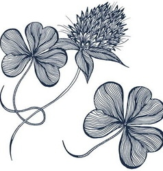 Drawing clover flower vector image