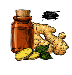 ginger essential oil bottle and ginger root hand vector image