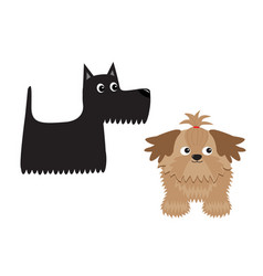 Scottish terrier black dog scottie puppy shih tzu vector