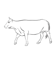 Cow drawing with floral ornament decoration vector image vector image