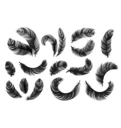 black feathers realistic fluffy swan feathers vector image