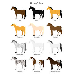 Flat collection set horse colors vector