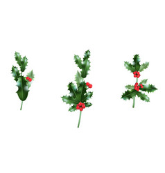 Holly branches set vector