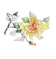 watercolor hand drawn flower on branch on white vector image