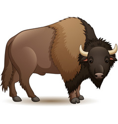 bison isolated on white background vector image