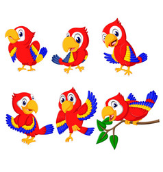 Collection beautiful red parrots vector