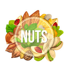 colourful banner with different kinds of nuts vector image