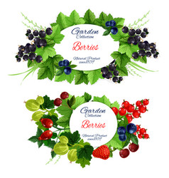 garden berries icons with fruits on leafy branches vector image