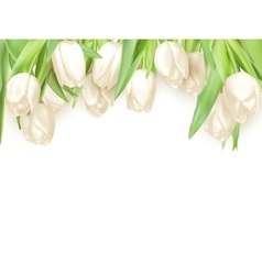 Isolated tulip frame eps 10 vector