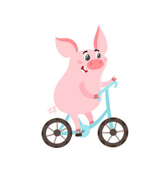 Cute pig on blue bike isolated on white vector