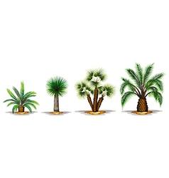 Palm plants vector