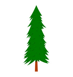 pine tree in cartoon style isolated on white vector image