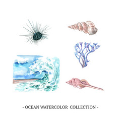 Wave shell coral watercolor design on white vector