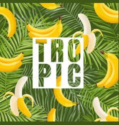 tropical design with banana and palm leaves vector image vector image