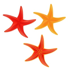 sea star vector image
