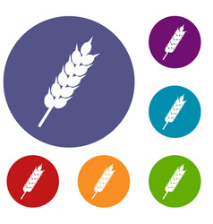 Dried wheat ear icons set vector