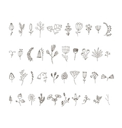 set 40 hand drawn line flowers and vector image