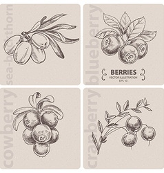 Set of berries vector