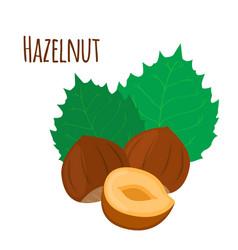 hazelnut cartoon forest natural nut organic ripe vector image