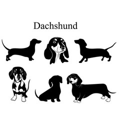 Dachshund set collection pedigree dogs black vector