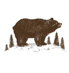Brown bear symbol vector image vector image