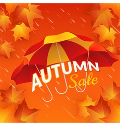Autumn sale banner with umbrellas and maple leaves vector