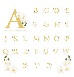 Beautiful gold serif phalaenopsis orchid floral vector
