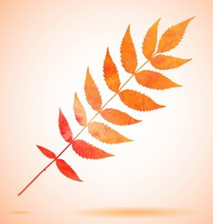 Orange watercolor painted leaf vector image