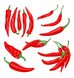 Red vegetables cayenne vector