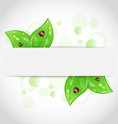 Eco green leaves with ladybugs sticking out of the vector image vector image