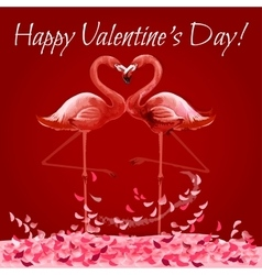 Valentine Day card with flamingos love heart vector image