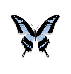 butterfly with black wings blue patterns vector image