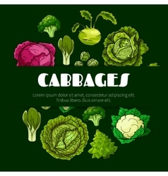 Cabbage vegetable poster for food design vector