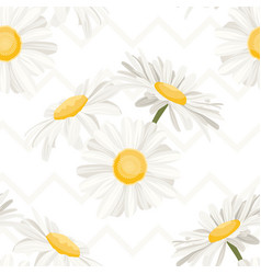 daisy chamomile camomile spring summer flowers vector image