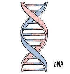 Gold dna dna symbol dna helix symbol gene icon vector