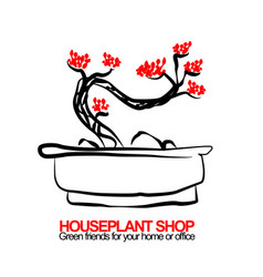 hand drawn of bonsai for housplant vector image