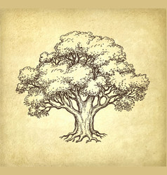 Ink sketch oak tree vector