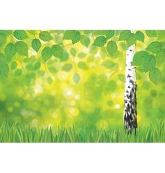 spring birch landscape vector image vector image